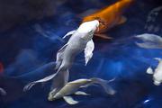 수중생물 154
