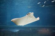 수중생물 175