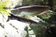 수중생물 205