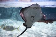 수중생물 214