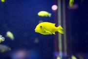 수중생물 223