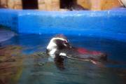 수중생물 225