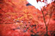 가을 풍경 034