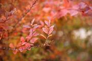 가을 풍경 038