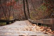 가을 풍경 043