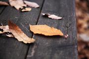 가을 풍경 050