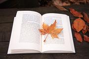 가을 풍경 054