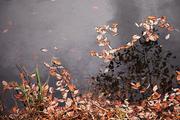 가을 풍경 061