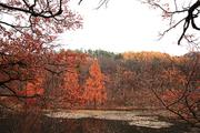 가을 풍경 063