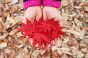 가을 풍경 072