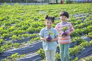 어린이농촌체험 270