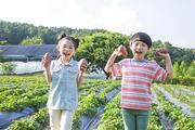 어린이농촌체험 296
