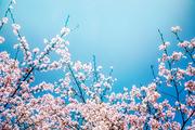 beautiful nature 056