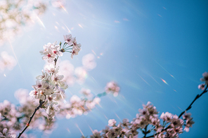 beautiful nature 035