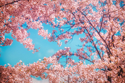 beautiful nature 062