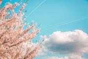 beautiful nature 064