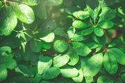 beautiful nature 085