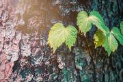 beautiful nature 092