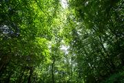 beautiful nature 097