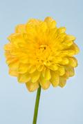 Flower 050