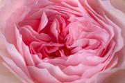 Flower 057
