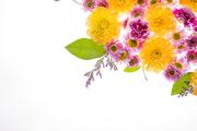 Flower 062