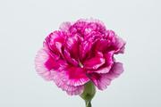 Flower 085