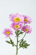 Flower 089