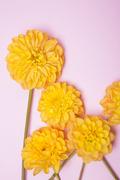 Flower 119