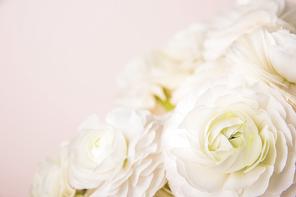 Flower 068