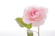 Flower 156