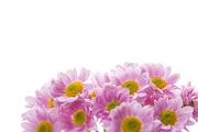 Flower 157