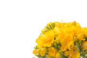 Flower 159