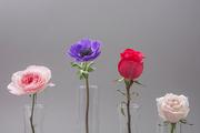 Flower 160