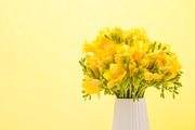 Flower 162