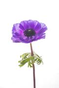 Flower 163