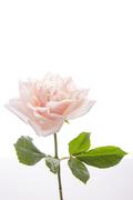 Flower 164