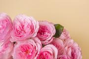Flower 165