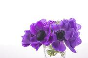 Flower 166