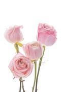Flower 167
