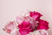 Flower 168