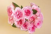 Flower 170