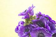 Flower 171