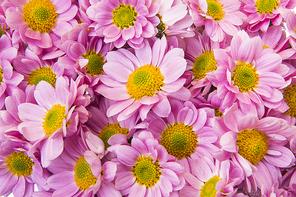 Flower 172