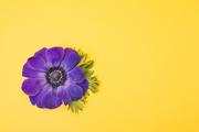 Flower 178