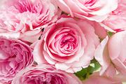 Flower 182