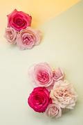 Flower 195