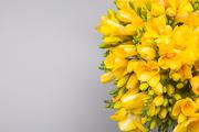 Flower 209
