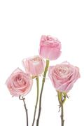 Flower 226