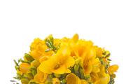 Flower 244